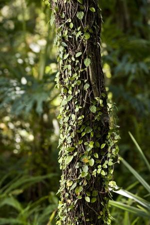 숲의 나무, 작은 덩굴로 덮여 트렁크