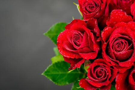 red roses on black background