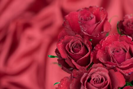 red roses on red background