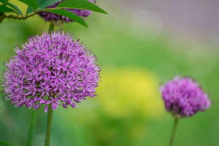 beautiful flowers in traditional English garden Stock Photo