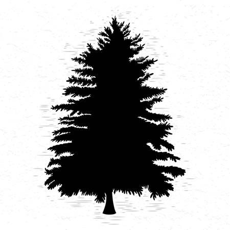 Fir tree on white textured background illustration. Black coniferous tree silhouette. Hand drawing. Ilustração
