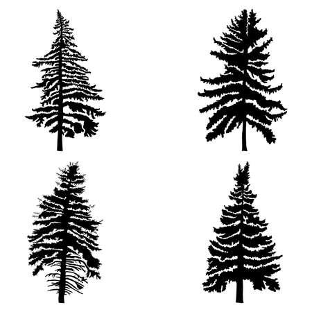 白い背景イラストを分離したセットのモミを木します。黒の針葉樹のシルエットのコレクションです。手描き。