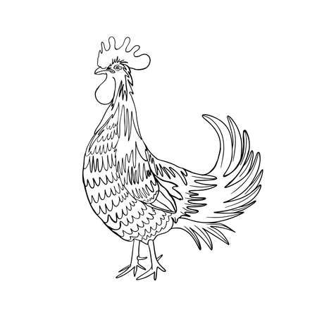 Image of a hand drawing cock or rooster with black outline on white background. Chinese zodiac rooster design element for Chinese New Year decoration. Drawing for coloring. Vector.