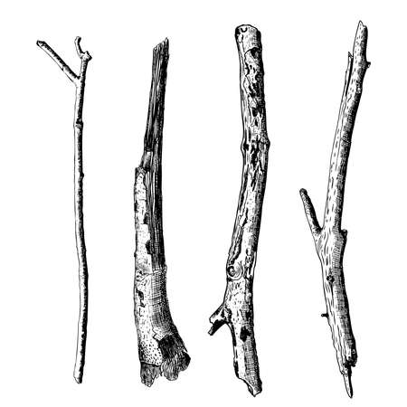 Hand drawn wood twig set,  ink rustic design elements collection. Dry wood tree branch and wooden twig bundle. Detailed and precise ink drawing driftwood twigs set in engraved style. Vector. 版權商用圖片 - 64175801