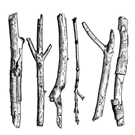 Set of detailed and precise ink drawing of wood twigs, forest collection, natural tree branches, sticks, hand drawn driftwoods forest pickups bundle. Rustic design, classic drawing elements. Vector. Stock Illustratie