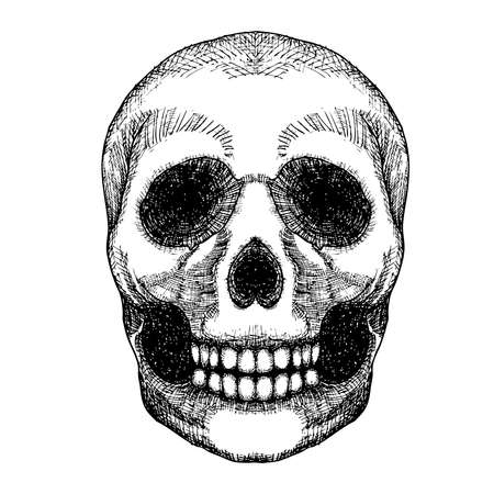attribute: Hand drawing skull. Human skull sketch. Black and white illustration of skull with a lower jaw, hand drawn. Witchcraft magic, occult attribute decorative element. Death and mortality symbol. Vector. Illustration