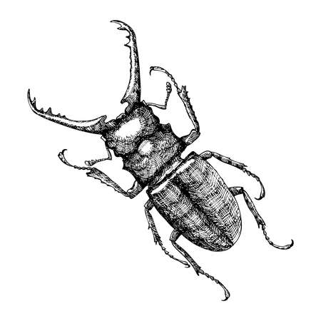 Hand drawn beetle. Black and white insect for design, icons