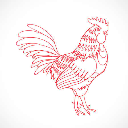 Chinese zodiac rooster design element for Chinese New Year decoration. Image of a hand drawing cock or rooster with red outline on grey background. Drawing for coloring. Vector.