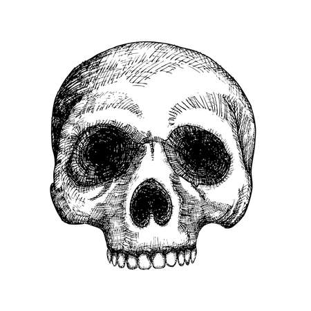 Hand drawing skull. Human skull sketch. Black and white illustration of skull, hand drawn. Witchcraft magic, occult voodoo attribute decorative element. Death and mortality symbol. Vector.