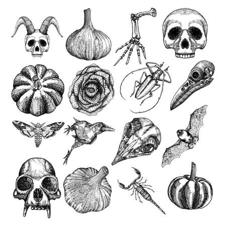 attributes: Witchcraft magic, occult attributes set, decorative elements. Human, monkey skulls, garlic, skeleton lizard hand, pumpkin, black rose, bug, beetle, moth, hawkmoth, crow, bat, scorpion. Vector.