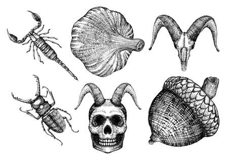 attributes: Set for Halloween. Set of witchcraft magic, occult attributes decorative elements. Human, demon with horns, goat skulls, bug, insect, beetle, garlic, oak nut. Folklore. Vector.