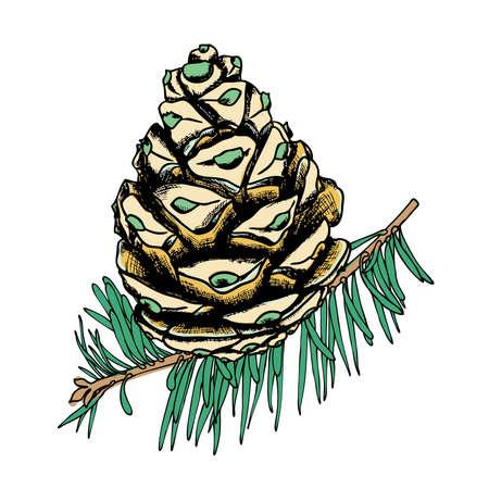 수채화 페인트와 손으로 그린 화이트 바늘 나무 가지에 모방 소나무 콘을 체결. 크리스마스 수제 전나무 콘입니다. 나무, 전나무, 소나무 또는 가