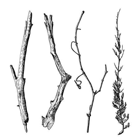twigs: Hand drawn wood twig set,  ink rustic design elements collection. Dry wood tree branch and wooden twig bundle. Detailed and precise ink drawing driftwood twigs set in engraved style. Vector.