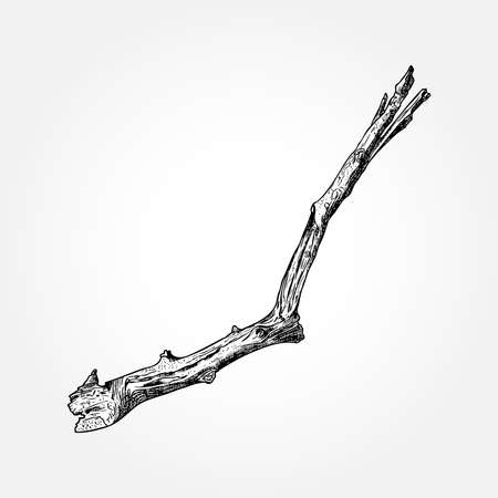precise: Detailed and precise ink drawing wood twig, isolated on white forest object, natural tree branch, stick, hand drawn driftwood forest floor pickups. Rustic design, classic drawing element. Vector.
