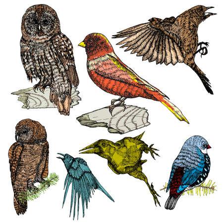 Set of birds, ink line drawing, hand drawn illustration. Vector. Illustration