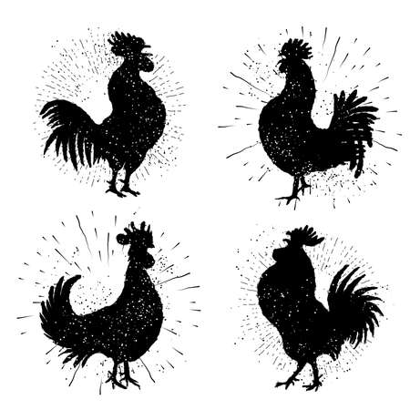 weathercock: Set of rooster labels. Vintage style cock illustration on hand drawing sunburst background or sun ray frame in vintage hipster style collection. Ink brush painting imitation with splashes.