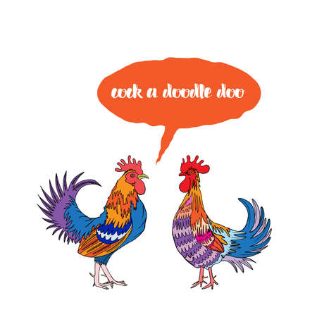 morning  cock: Cock a doodle doo calligraphy writing in speech bubble. Hipster design with roosters. Hand drawing morning roosters birds on white background.