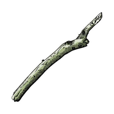 Hand drawn branch. Ink illustration. Watercolor imitation painted tree twig. Vector. Illusztráció