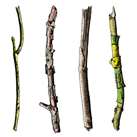 Set of ink drawing and painted wood twigs, isolated watercolor imitation tree branches, sticks, handmade illustration, vector.
