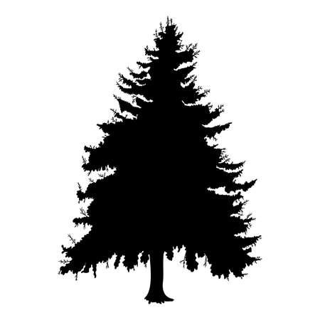 Hand drawn fir tree vector illustration. Silhouette of black pine tree.