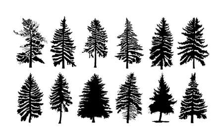 conifer: Vector set silhouette of different Canadian pine trees. Conifer tree silhouettes on the white background Collection. Bundle of trees.