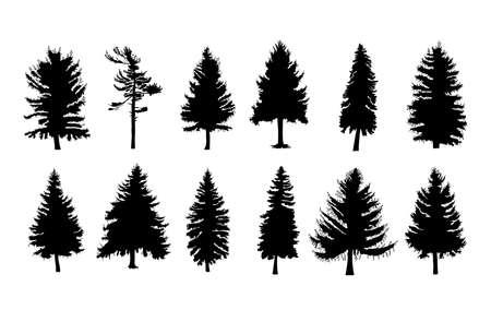 ベクトルは、別のカナダの松の木のシルエットを設定します。ホワイト バック グラウンド コレクションに針葉樹木シルエット。木の束。