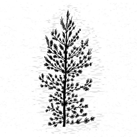Fir tree on white textured background illustration. Black coniferous tree silhouette. Hand drawing. Ilustrace