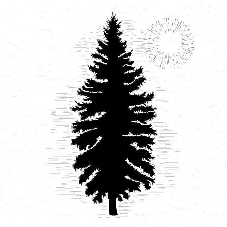 カナダの松の木のシルエットのベクター。白いテクスチャ背景の針葉樹木シルエット。