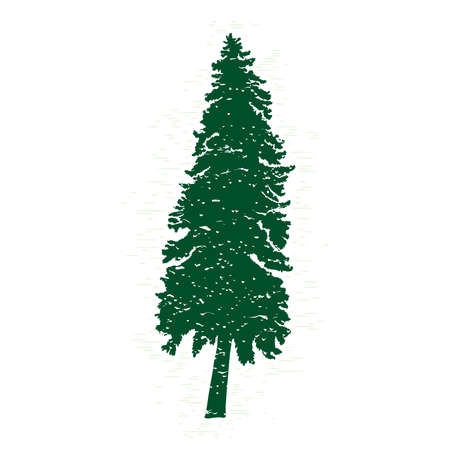 evergreen: Vector evergreen silhouette of pine and fir tree, conifer tree, nature design element.