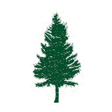 conifer: Vector evergreen silhouette of pine and fir tree, conifer tree, nature design element.