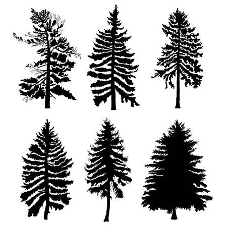 Fir trees set isolated on white background illustration. Collection of black coniferous trees silhouettes. Hand drawing. Ilustração