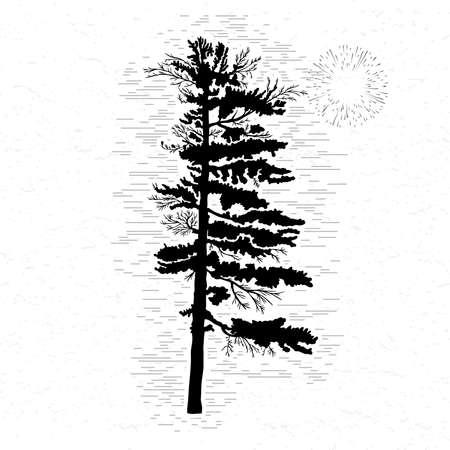白いモミの木はテクスチャ背景イラストです。黒い球果を結ぶ木のシルエット。手描き。