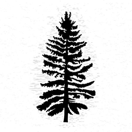 conifer: Vector silhouette of Canadian pine tree. Conifer tree silhouettes on the white textured background.