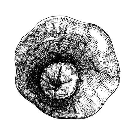 Hand drawn pomegranate. Pomegranate sketch style illustration. Organic food. Vector. Ilustração