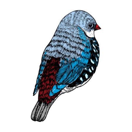 Bird, ink line drawing, hand drawn illustration. Vector.