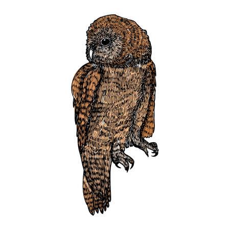 Bird, owl ink line drawing, hand drawn illustration. Vector.