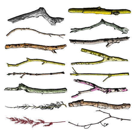 ramification: Hand painted wood twig set, ink rustic design elements collection. Dry wood tree branch and wooden twig bundle. Detailed and precise watercolor imitation driftwood twigs set. Vector. Illustration