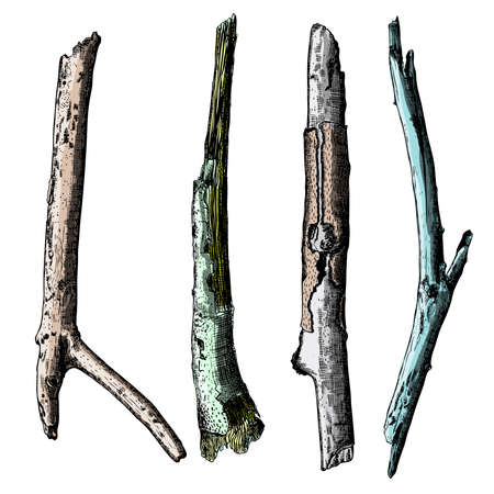 precise: Hand painted wood twig set, ink rustic design elements collection. Dry wood tree branch and wooden twig bundle. Detailed and precise watercolor imitation driftwood twigs set. Vector. Illustration
