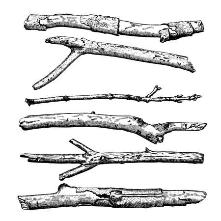 ramification: Set of Driftwood, ground floor hand drawn ink rustic design elements collection. Dry tree branches and wooden twigs. Vintage highly detailed classic ink drawings bundle art in engraved style. Vector. Illustration