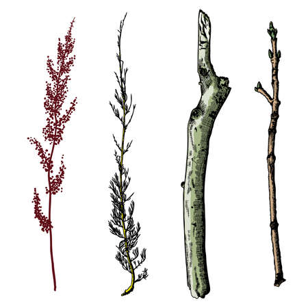 Hand painted wood twig set, ink rustic design elements collection. Dry wood tree branch and wooden twig bundle. Detailed and precise watercolor imitation driftwood twigs set. Vector.  イラスト・ベクター素材