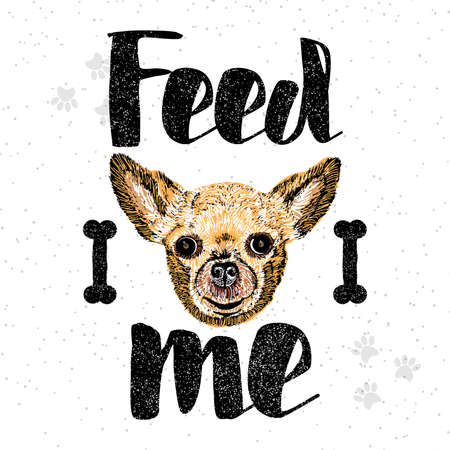 starving: Feed me. Vector illustration with hand drawn lettering and cat on texture background. Inscriptions for pet lovers. Painted brush lettering. Custom typography. Calligraphic. Poster, demanding phrase. Illustration
