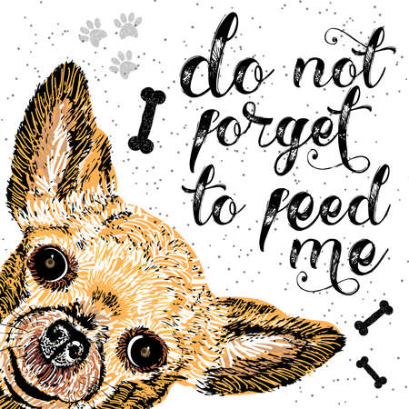 starving: Do not forget to feed me, sign with cute smiling dog. Vector illustration, lettering on texture background. Inscriptions for pet lovers. Painted lettering. Typographic calligraphic. Demanding phrase. Illustration