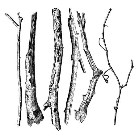 Set of detailed and precise ink drawing of wood twigs, forest collection, natural tree branches, sticks, hand drawn driftwoods forest pickups bundle. Rustic design, classic drawing elements. Vector. Çizim