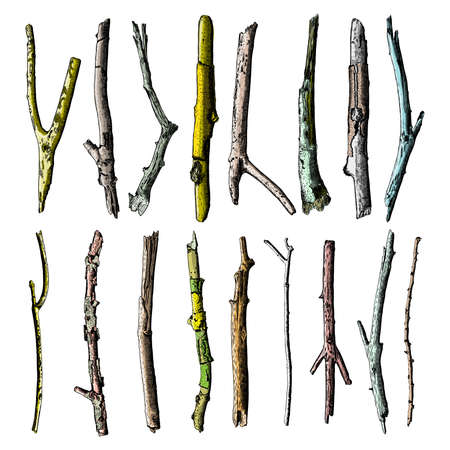twigs: Set of ink drawing and painted wood twigs, isolated watercolor imitation tree branches, sticks, handmade illustration, vector.