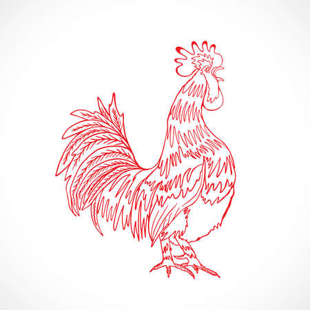 acclaim: Chinese zodiac rooster design element for Chinese New Year decoration. Image of a hand drawing cock or rooster with red outline on grey background. Drawing for coloring. Vector.