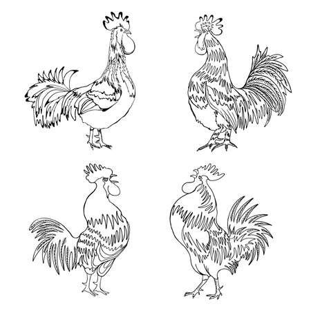 異なる方向とポーズでルースターズのセットです。手描きのコック。詳細な品質の農場の鳥のコレクションです。2017 中国の新しい年の干支シンボル