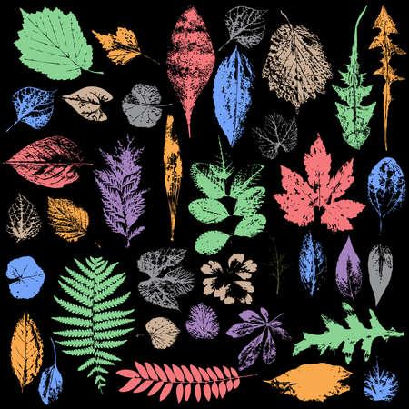 multicolor Autumn leaf silhouettes, seasonal Ilustração