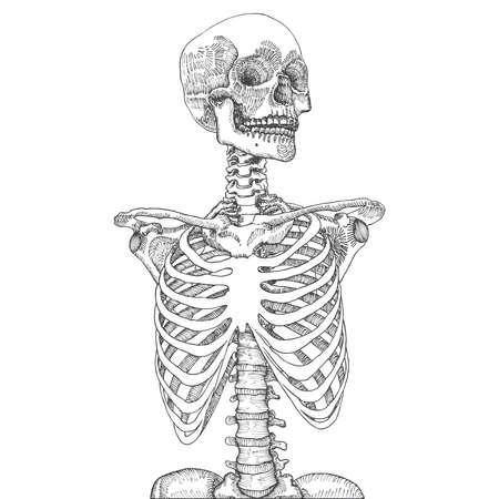 手には、頭蓋骨の解剖学的医療人体胸部が描画されます。白地。T シャツ印刷用に設計されています。ベクトルの図。