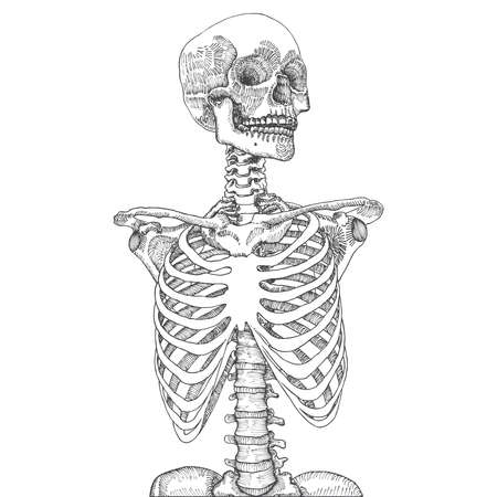 Hand drawn anatomical medical human ribcage with skull. On white background. Designed for t-shirt print. Vector illustration. Illustration