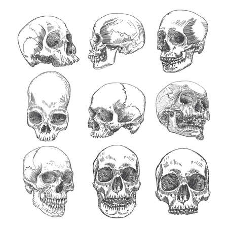 Big set of anatomic skulls in different directions and conditions, weathered and museum quality, medical study detailed hand drawn illustration. T-shirt rock music prints. Vector Art. Illustration